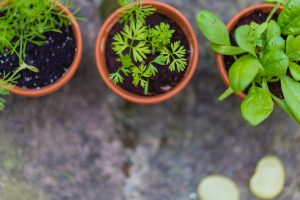 home herb kit