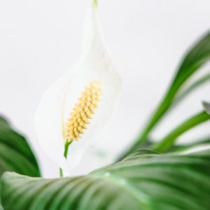 best houseplant for bedroom